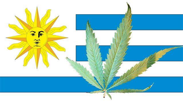 Maconha legalizada no Uruguai